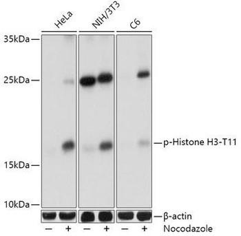 Epigenetics and Nuclear Signaling Antibodies 4 Anti-Phospho-Histone H3-T11 Antibody CABP0093