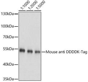 Protein Tags Anti-Mouse anti DDDDK-Tag Monoclonal Antibody CABE005