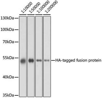Protein Tags Anti-Mouse anti HA-Tag Monoclonal Antibody CABE008