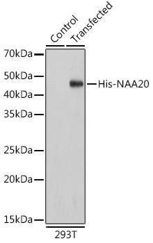 Protein Tags Anti-HRP-conjugated anti His-Tag Antibody CABE028