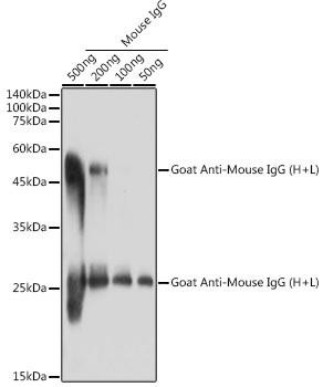 Secondary Antibodies Anti-Goat Anti-Mouse IgG HL Antibody CABS071