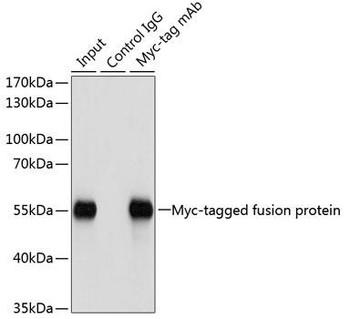 Secondary Antibodies Anti-Mouse Control IgG Antibody CABC011
