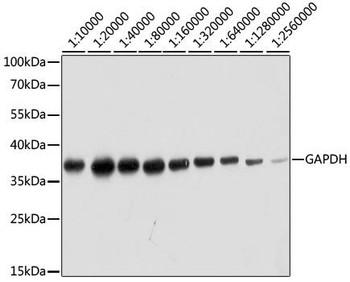 Cell Death Antibodies 2 Anti-Human Specific GAPDH Antibody CABC036