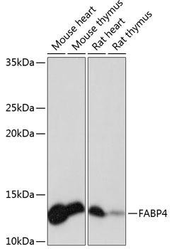 Signal Transduction Antibodies 3 Anti-FABP4 Antibody CAB11481