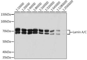 KO Validated Antibodies 2 Anti-Lamin A/C Antibody KO Validated CAB19524
