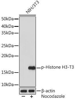 Cell Biology Antibodies 14 Anti-Phospho-Histone H3-T3 Antibody CABP1152
