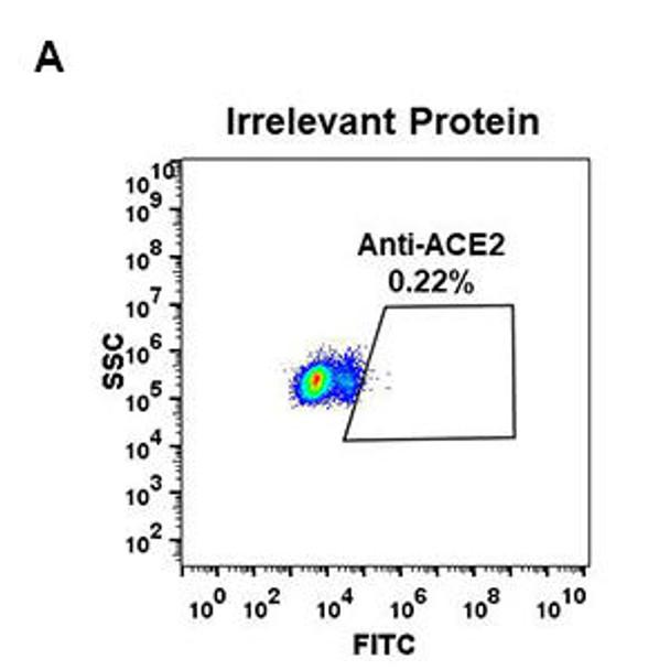 Anti-ACE2 antibody DM47 Rabbit mAb HDAB0037