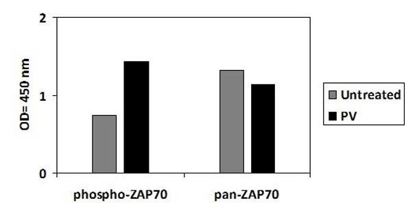 Human Phospho-ZAP70 Y493 PharmaGenie ELISA Kit SBRS2020