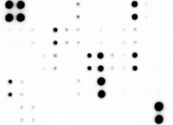 Human Cytokine Array 120 targets SARB0031