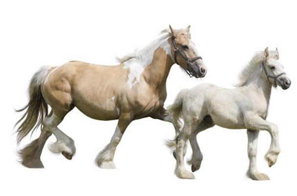 Horse ELISA Kits Horse Phosphatidylserine PS ELISA Kit