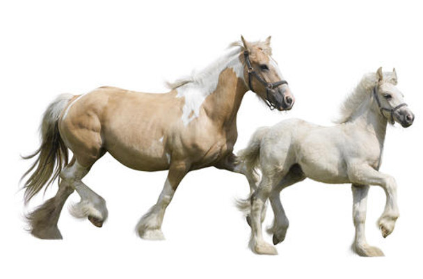 Horse ELISA Kits Horse Allopregnanolone AP ELISA Kit
