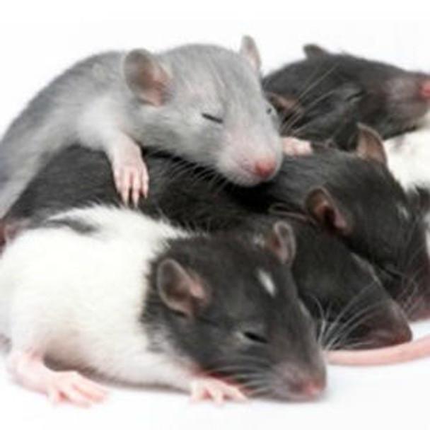 Rat Immunology ELISA Kits 3 Rat IL-6 ELISA Kit RTEB0061