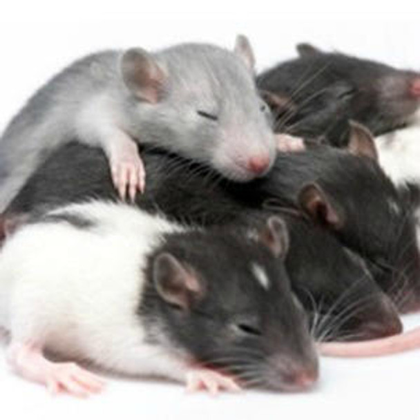 Rat Signaling ELISA Kits 1 Rat Cyclic guanosine monophosphate cGMP ELISA Kit