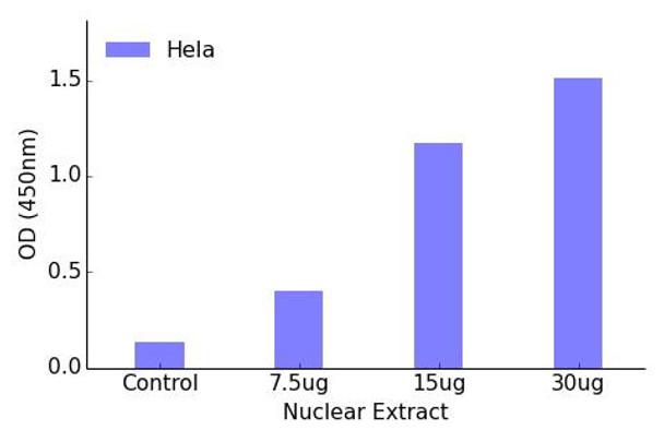 MEF2A Phospho-Thr312 Transcription Factor Activity Assay