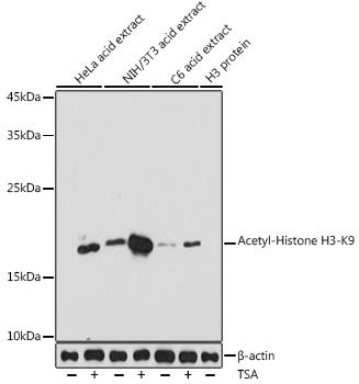 Acetyl-Histone H3-K9 Rabbit Polyclonal Antibody (CAB7255)