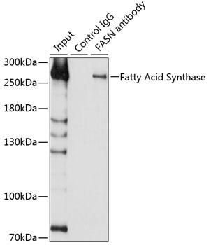 Fatty Acid Synthase Rabbit Polyclonal Antibody (CAB0461)