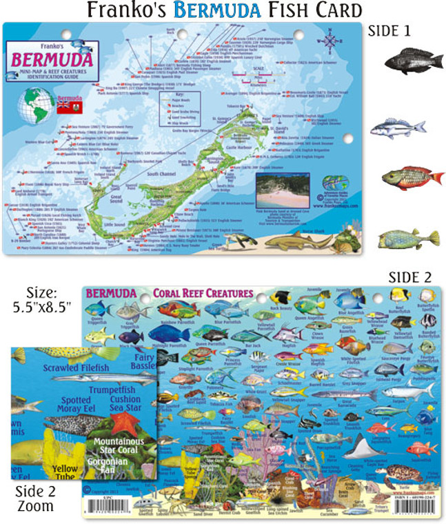 Franko Maps Bermuda Fish ID for Scuba Divers and Snorkelers