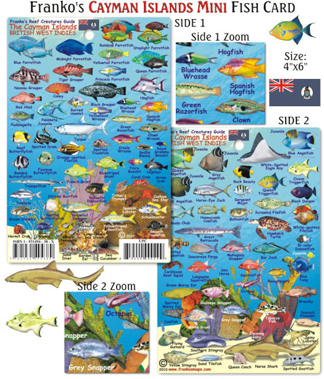 Franko Maps Mini Cayman Islands Reef Creatures Fish ID- Scuba Divers/Snorkelers