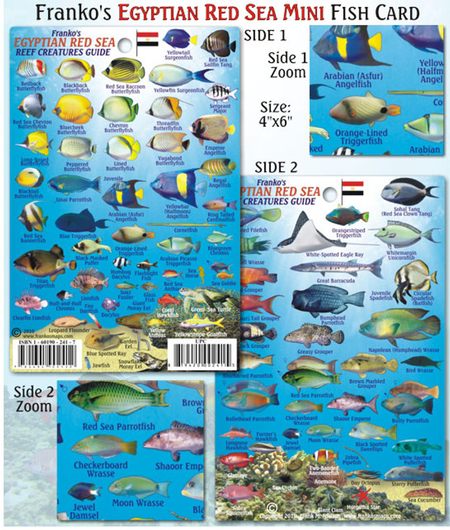Franko Maps Egyptian Red Reef Creatures Guide for Scuba Divers and Snorkelers