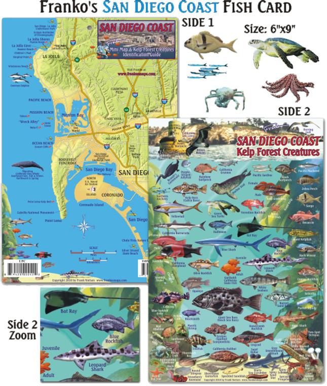 San Diego Kelp Creatures for Scuba Divers