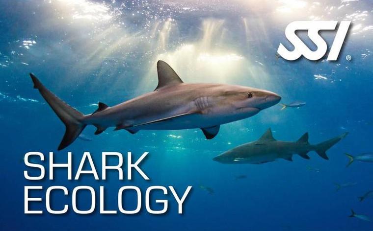 Shark Ecology – Virtual Classroom Sessions