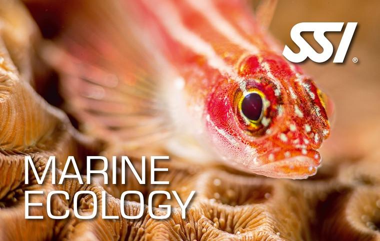 SSI Marine Ecology Kit