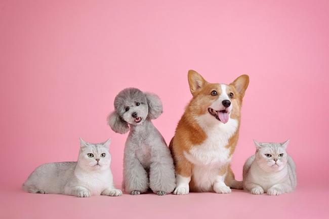 Pet CBD, CBD Treats For Cats, CBD Dog Treats