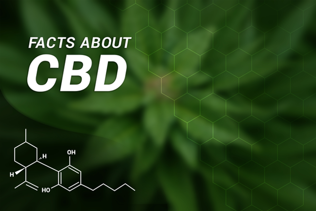 What Forms Does CBD Come In?
