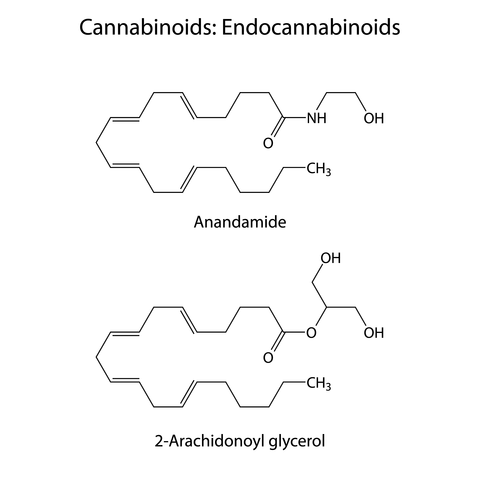 endocannabinoid-deficiency