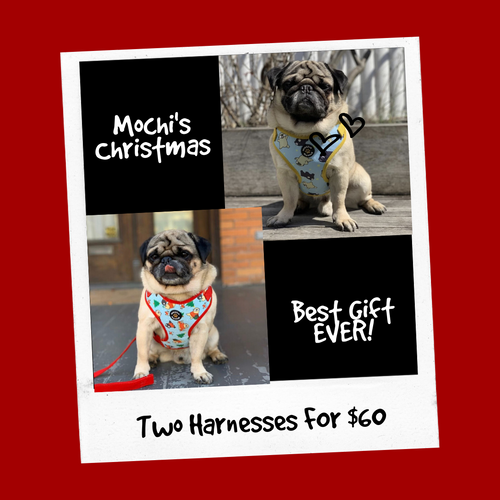 Mochi's Christmas in July special