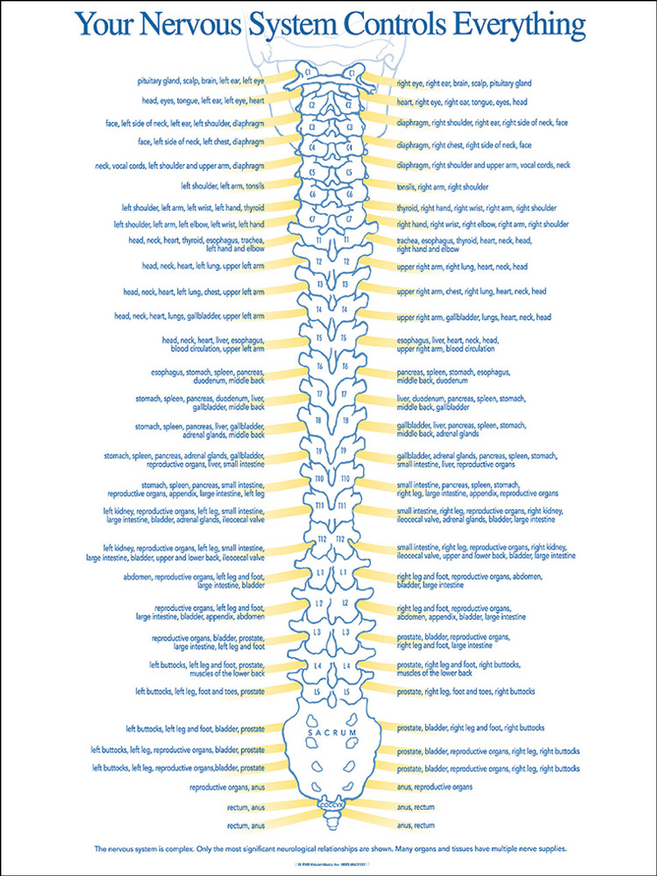 Chiropractic spinal nerve chart nerve function chart
