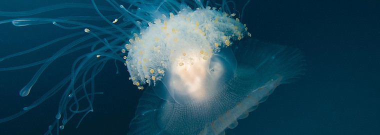 Digital Underwater Photography - eLearning Upgrade