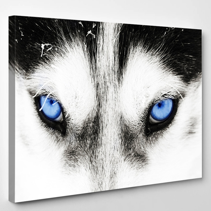 Eyes Of The Arctic Wolf - Abstract Animal Canvas Wall Decor