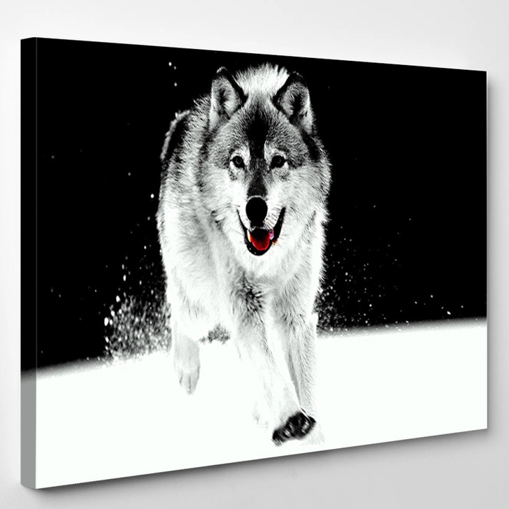 Snow Wolf Black And White - Animal Canvas Wall Decor