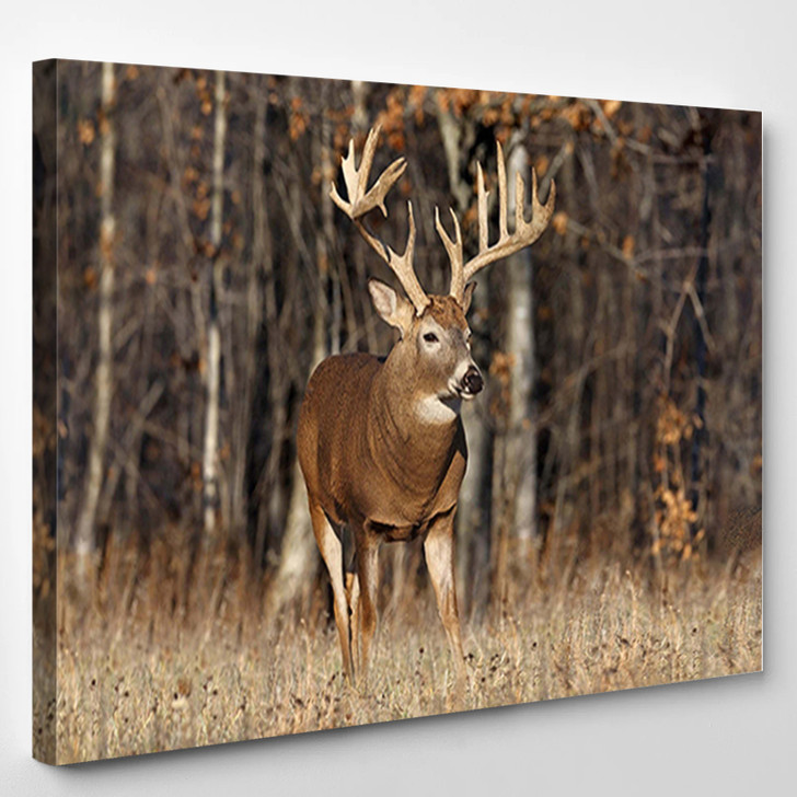 Deer Forest - Animal Canvas Wall Decor