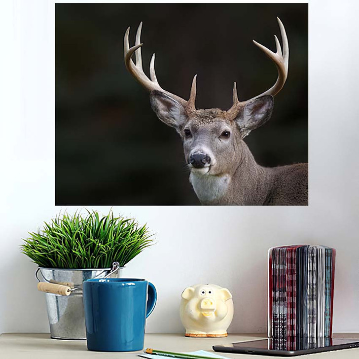 10 Point Buck Whitetail Deer Portrait - Hunting and Fishing Wall Art Poster