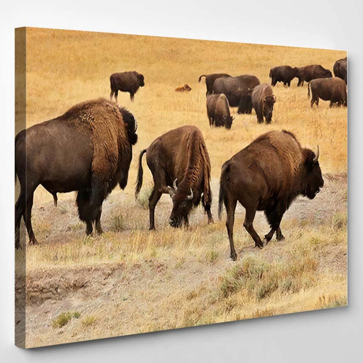 American Bison Simply Commonly Known Buffalo - Bison Animals Canvas Wall Decor