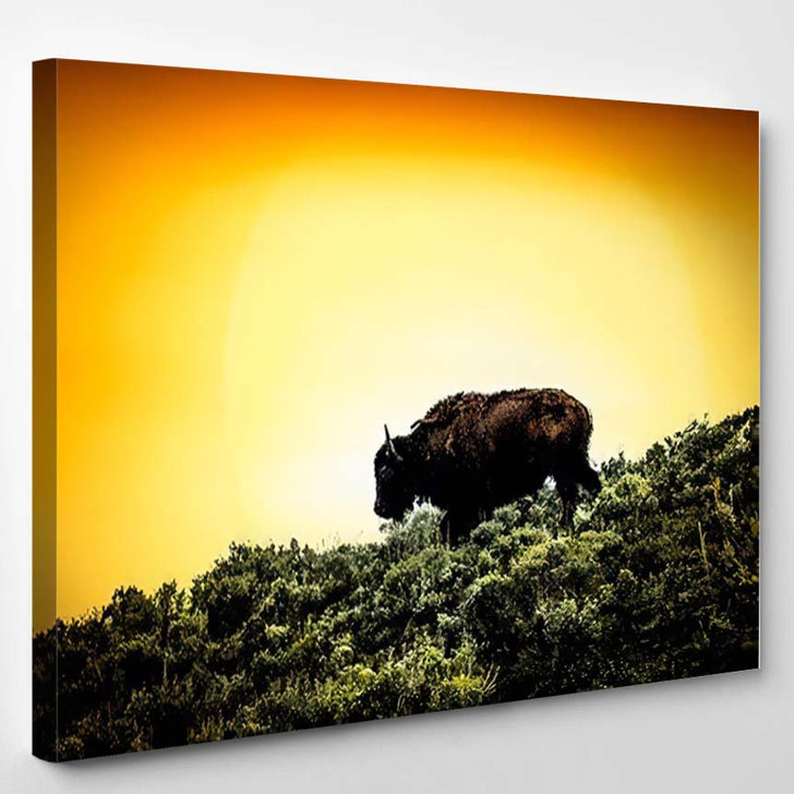 Bison Yellowstone Sunset Backdrop National Park - Bison Animals Canvas Wall Decor