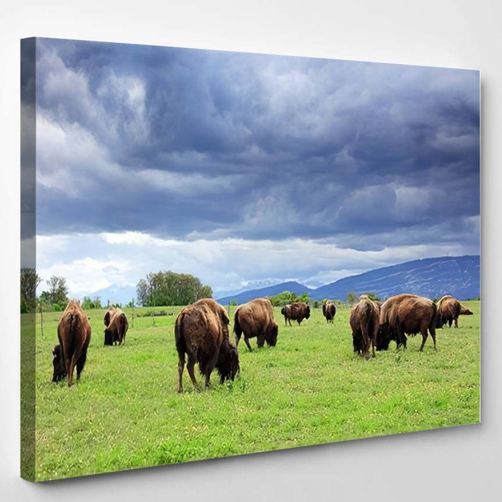Herd American Bison Buffalo Cloud Covered - Bison Animals Canvas Wall Decor