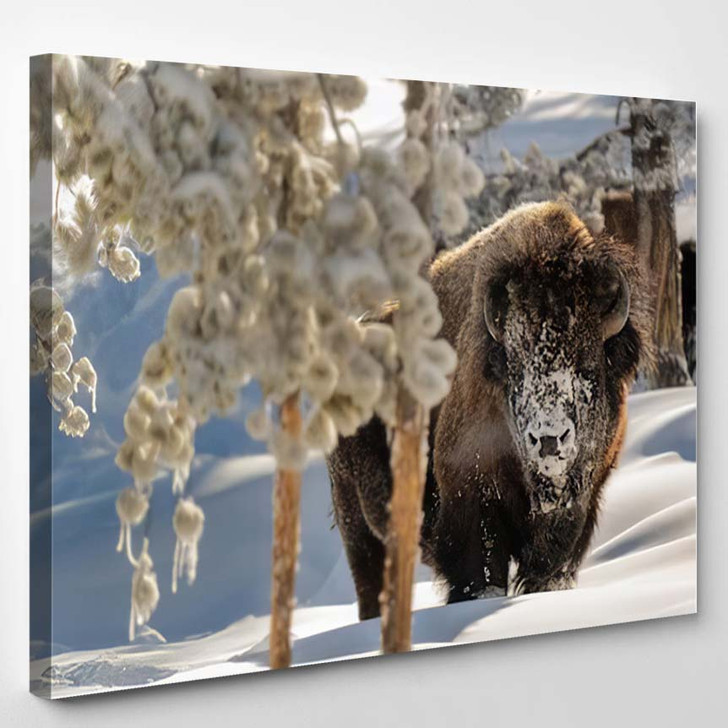 View American Bison During Winter - Bison Animals Canvas Wall Decor