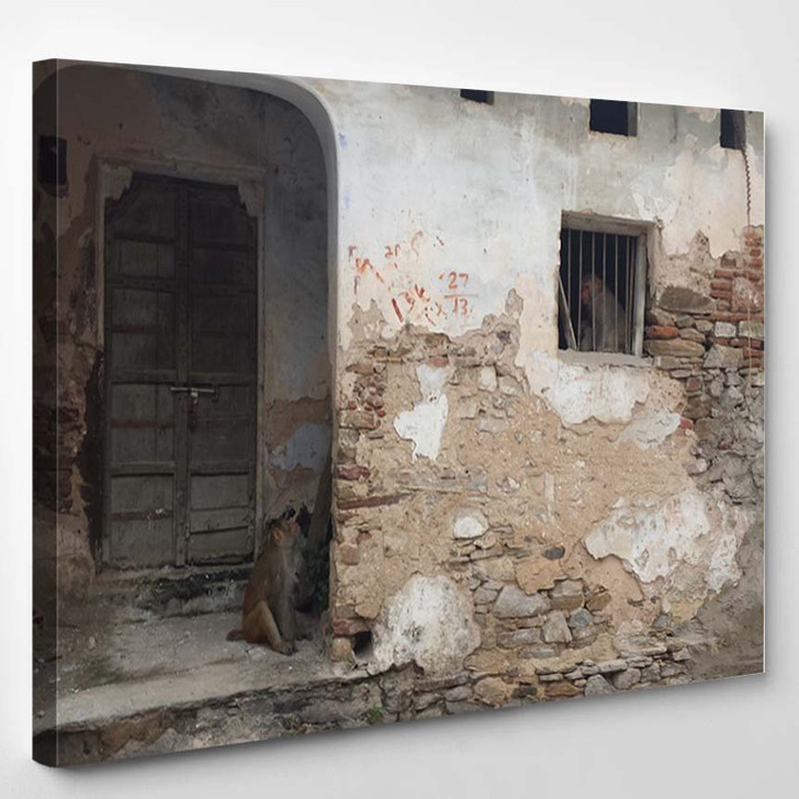 2 Monkeys Old Building Pushkar Rajasthan - Canvas Wall Decor