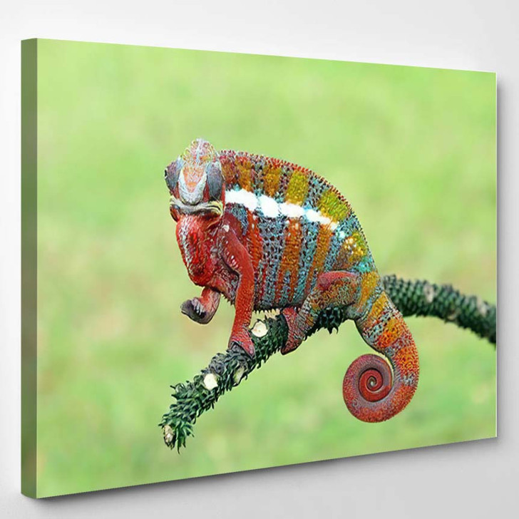 Beautiful Chameleon Panther On Branch Climbing - Black Panther Animals Canvas Wall Decor