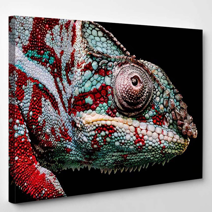Close Eye Green Red Panther Chameleon - Black Panther Animals Canvas Wall Decor