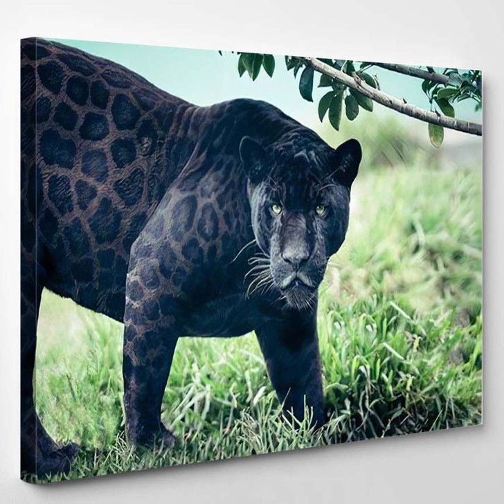 Portrait Black Panther Wild Cat Looking - Black Panther Animals Canvas Wall Decor