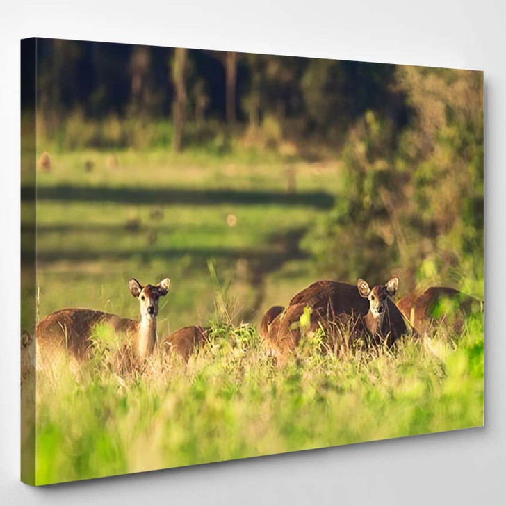 Beautiful Moment Hog Deers Natural Condition 4 - Deer Animals Canvas Wall Decor