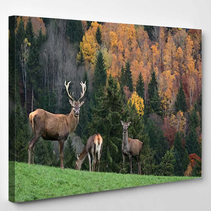 Deer On Colourful Background 1 - Deer Animals Canvas Wall Decor