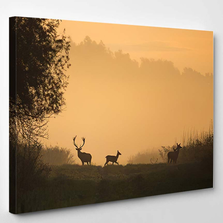Silhouette Red Deer Hinds On Meadow - Deer Animals Canvas Wall Decor
