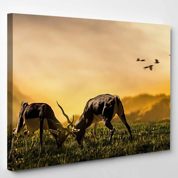 Two Deer Stags Fighting On Grassland - Deer Animals Canvas Wall Decor
