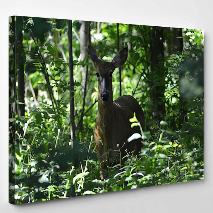 White Tail Deer Hiding Forest - Deer Animals Canvas Wall Decor