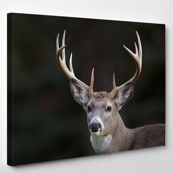 10 Point Buck Whitetail Deer Portrait - Hunting and Fishing Canvas Wall Decor